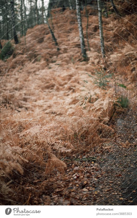 #A0# Autumn walk through the wood Autumnal Autumn leaves Autumnal colours Early fall Automn wood Autumnal landscape autumn mood Forest path