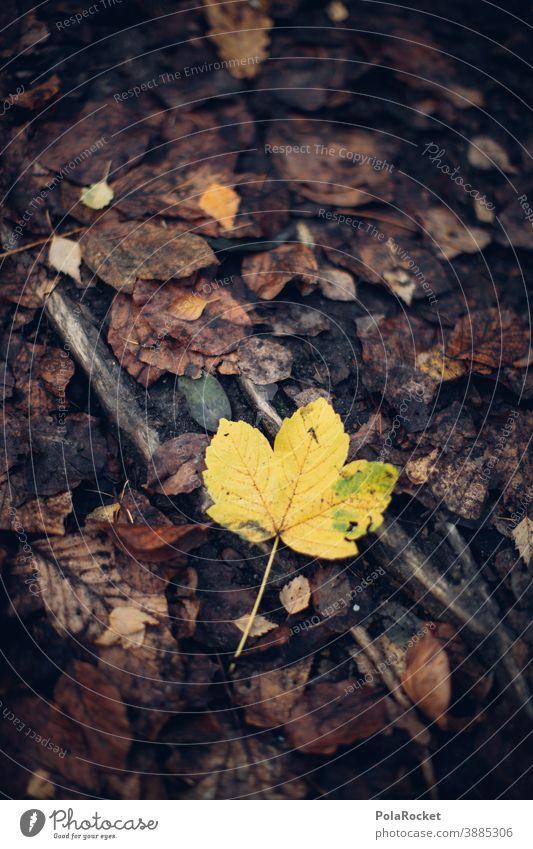 #A0# Yellow autumn leaf Autumn Autumnal Autumn leaves Autumnal colours Early fall Automn wood Autumnal weather Autumnal landscape autumn mood Leaf foliage