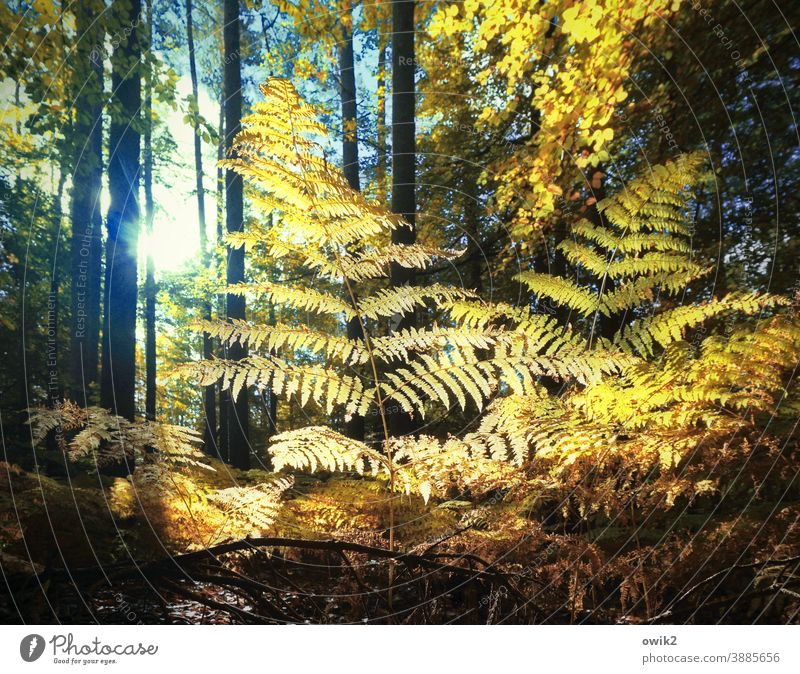 Fern Fan Forest Bushes Clearing Pteridopsida Plant Growth Beautiful weather Edge of the forest Tree Idyll Calm Exterior shot Colour photo Structures and shapes