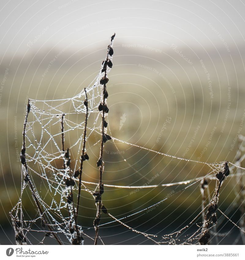 unfinished Detail Spider's web Bushes Net Mysterious Firm Thin Pattern Plant Idyll spun Close-up Macro (Extreme close-up) Near Twilight Structures and shapes
