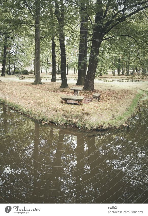 parking bay Park trees Water plants Exterior shot Colour photo Deserted Forest Plant Green Idyll Tree Nature Reflection Landscape Lake Day Sky Calm Pond
