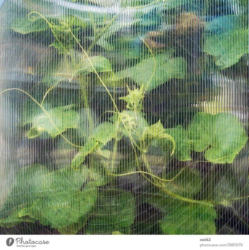 Window curtain textured glass Glass Detail Plant Structures and shapes Hazy Pattern Copy Space top Colour photo Deserted blurred Light (Natural Phenomenon)