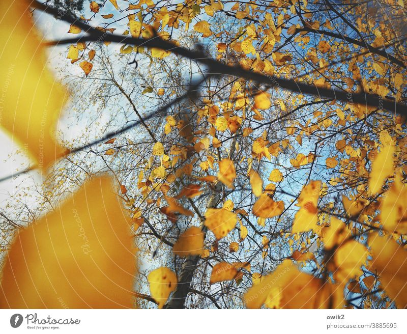 Autumnal swabs Environment Nature Plant Leaf Exterior shot Colour photo Change Deserted Copy Space bottom Sunlight Cloudless sky Blue Beautiful weather Growth