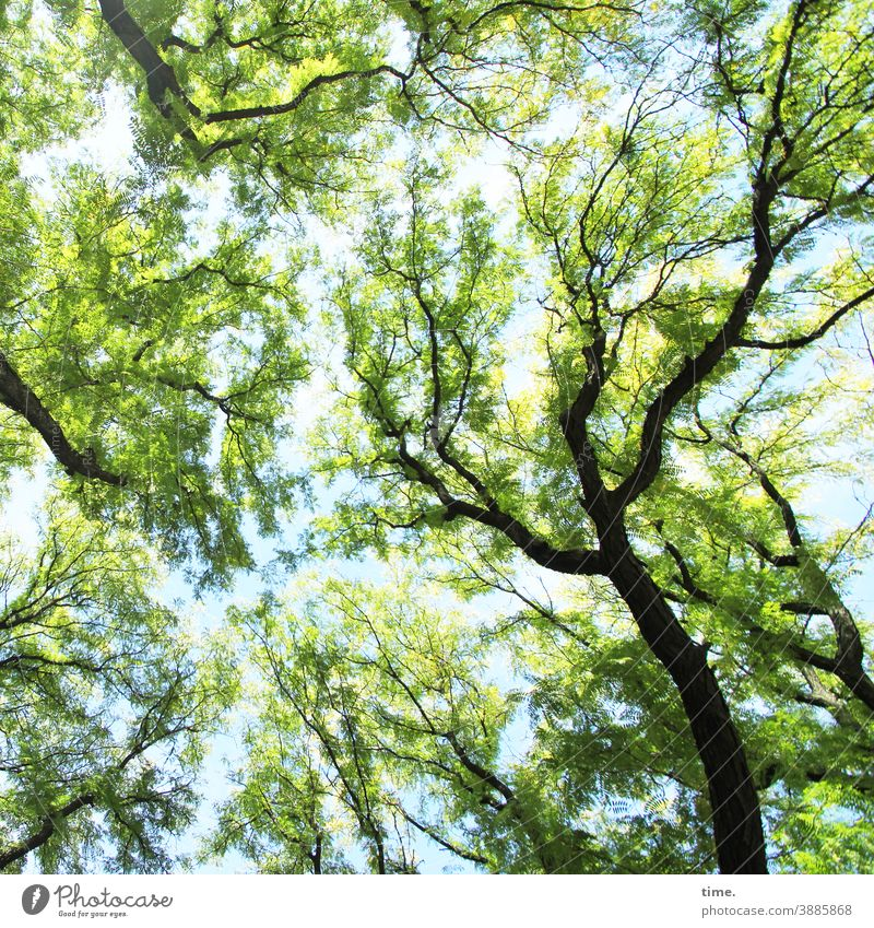 system relevant | healthy trees Tree Leaf canopy leaves Branch branches Treetop Blue Green Spring Spirited Swing natural ecology Environment salubriously Fresh