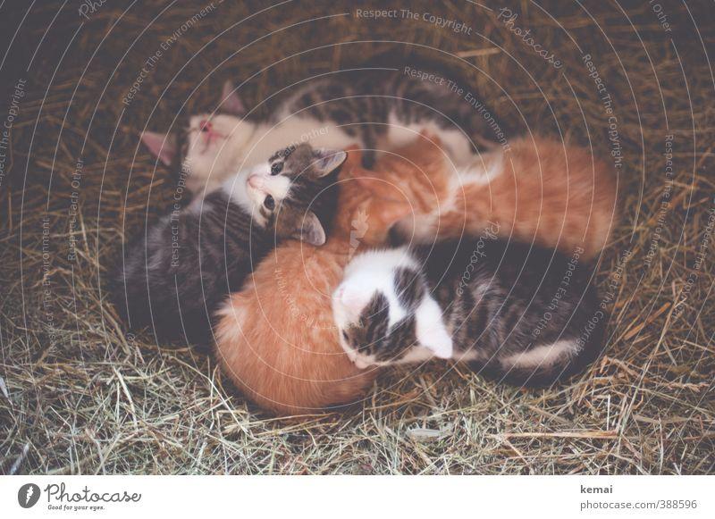 We are family (II) Animal Pet Cat Animal face Pelt Group of animals Baby animal Animal family Straw Lie Sleep Small Curiosity Cute Trust Safety