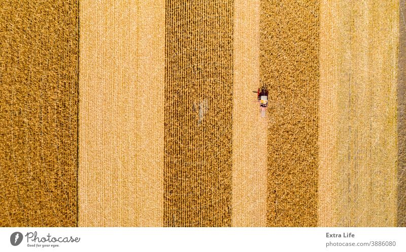 Above view on combine, harvester machine, harvest ripe maize Agricultural Agriculture Agronomy Cereal Combine Corn Cornfield Country Crop Cultivated Cultivation