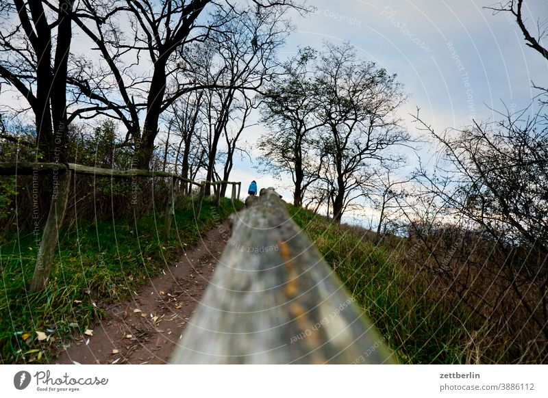 Hiking trail with railing Branch Tree Relaxation holidays Garden Grass Autumn Sky allotment Garden allotments Deserted Nature November Plant Lawn tranquillity