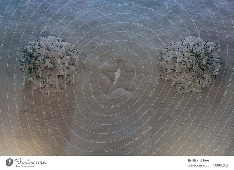 Imprint star symbol in snow next to snow-covered fir trees Frost Nature Frozen Ground Fresh noel Tree Jawbone Room Festive traditionally Winter Holiday season