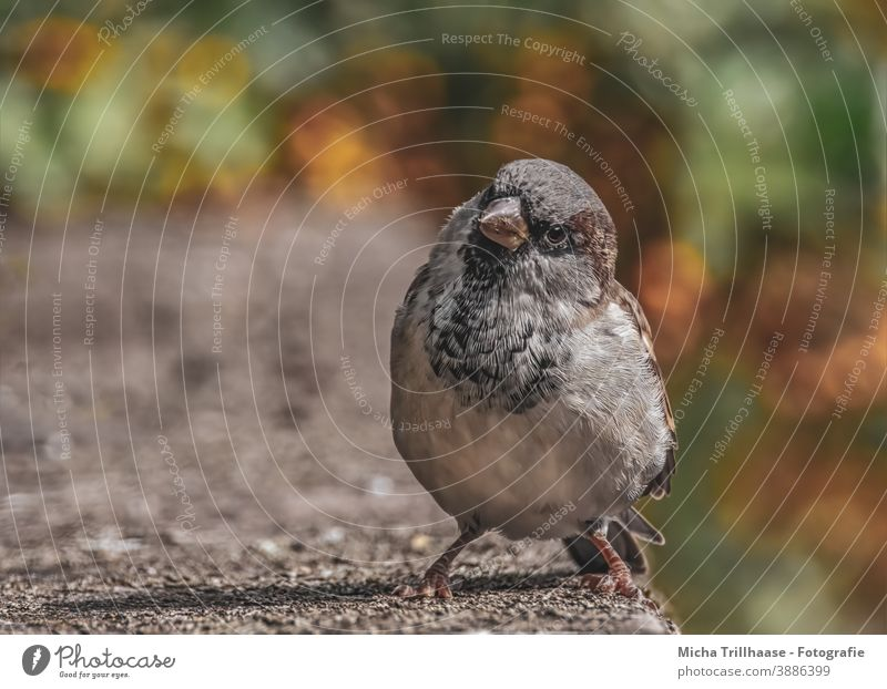 Curious view from the sparrow Sparrow passer domesticus Animal face Head Beak Eyes Grand piano Feather Claw Bird Wild animal Twigs and branches Bushes Sunlight