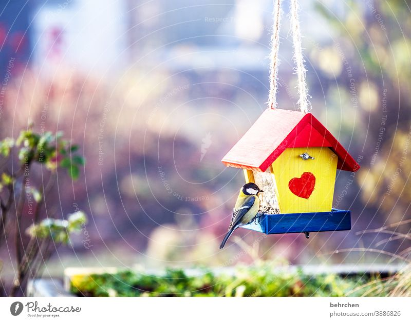 tit favorite place Animal protection Love Small Songbirds Deserted Tit mouse Feed Beak Feather Animal portrait Wild animal Love of animals Bushes bird house
