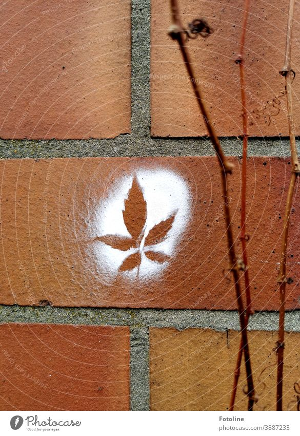 Pure nature? - or on a wall, which decorates leafless tendrils of wild wine, a canabis leaf was sprayed with white paint Wall (barrier) brick Wall (building)
