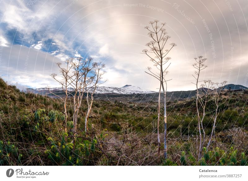 The wintry, hilly landscape around Mount Etna that appears on the horizon Landscape Nature Volcano Mountains and mountain ranges plants Bushes bushes Wilderness