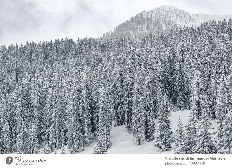 whites pines trees covered with snow panorama sky landscape nature dolomite mountain field frost beauty cloud italy range ice beautiful background cold blue
