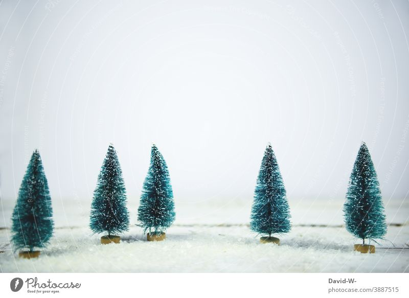 Christmas - Christmas trees miniature in a snowy landscape fir trees Snow Miniature Winter Winter mood winter Winter's day White Winter forest