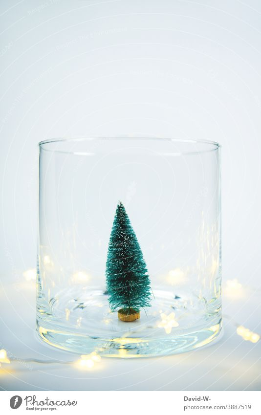 Christmas decoration - Miniature Christmas tree with lights in a glass Christmas & Advent Fairy lights fir tree Placeholder Christmassy Illuminate Fir tree