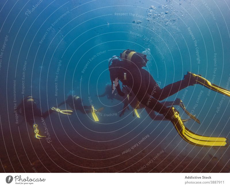 Divers swimming in deep ocean among aquatic vegetation underwater fish nature sea colorful background blue environment tropical adventure scuba dive vacation