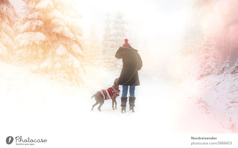 Walk in the snow with dog in a dreamy winter forest Winter Snow Winter forest Woman Dog Christmassy Hound Weimaraner Advent winter clothes youthful bobble hat