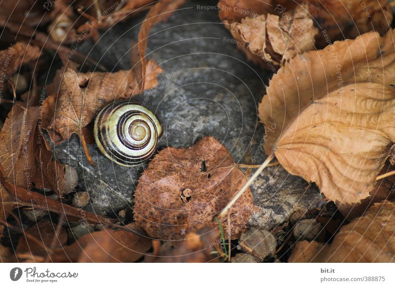 in the snail's nest Environment Nature Plant Animal Autumn Crumpet 1 Dark Round Dry Under Calm Decline Transience Change Time Autumn leaves Autumnal Early fall