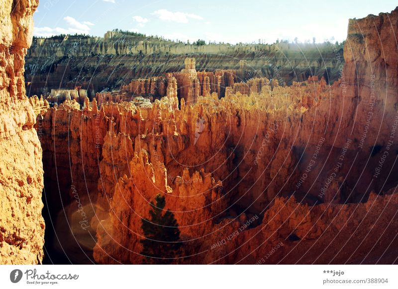The bryce is hot. Landscape Elements Canyon Bryce Canyon Bryce Canyon National Park Bryce Amphitheater Vacation & Travel Americas USA Utah Hoodoos