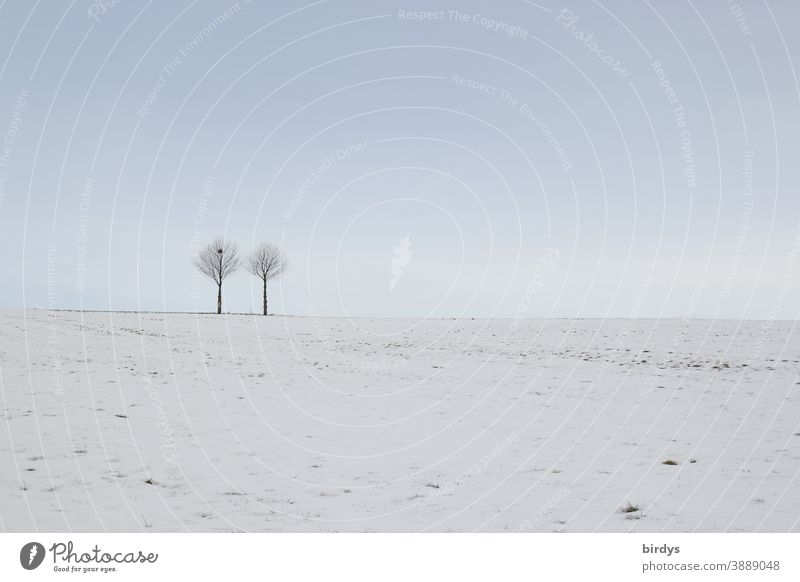 2 trees in a snowy landscape, blue sky . muted colors Snow Tree Snowscape Winter Nature Sky Winter mood snow-covered Still Life Frost Cold snow-covered meadow