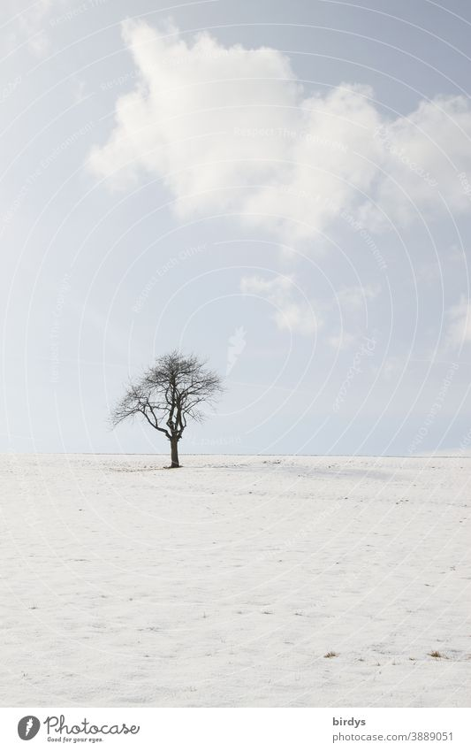 Single tree in a snowy landscape, blue sky with clouds. muted colours Snow Tree Snowscape Winter Nature Sky Clouds Winter mood snow-covered Still Life Frost