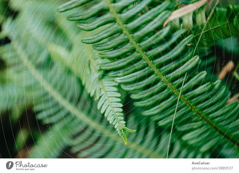 A background of some green light leaves in the forest Nature Close-up Drop Leaf Green droplet Plant Glittering Lush New Vegetable freshness herbaceous raindrops