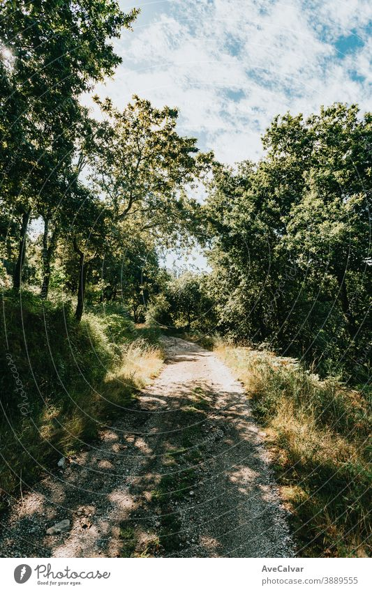 Perfect path for hiking through the forest sunlight green tree nature summer sunshine landscape environment autumn countryside horizontal way park leaf trail