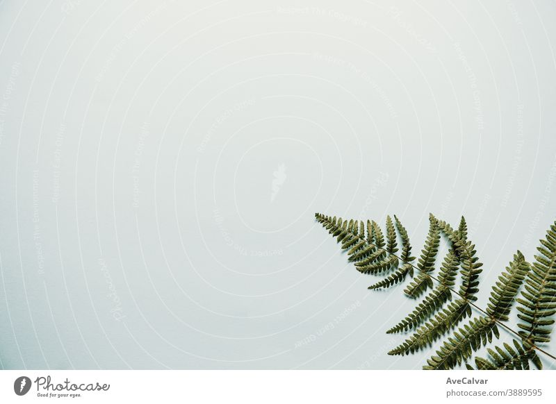 A minimalist background with a fern on the corner home wooden empty houseplant rubber fig interior decoration panel fresh light wood ceiling floor mockup blank