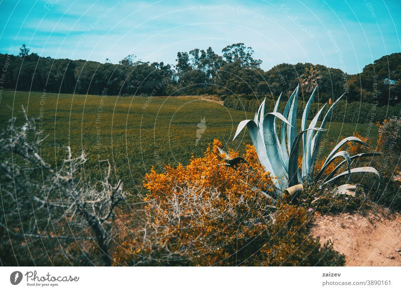 landscape of a field in spain on a sunny day without people outdoor wide copy space left horizontal color agave mountain bush nature spring plant summer