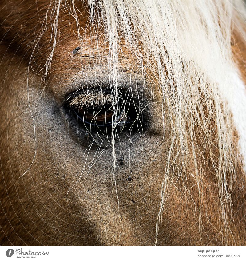 horse face, close-up with eye Horse Face Animal Nature animal portrait Eyes Mane Hair and hairstyles Brown Pelt Mammal Head Animal portrait Animal face pretty