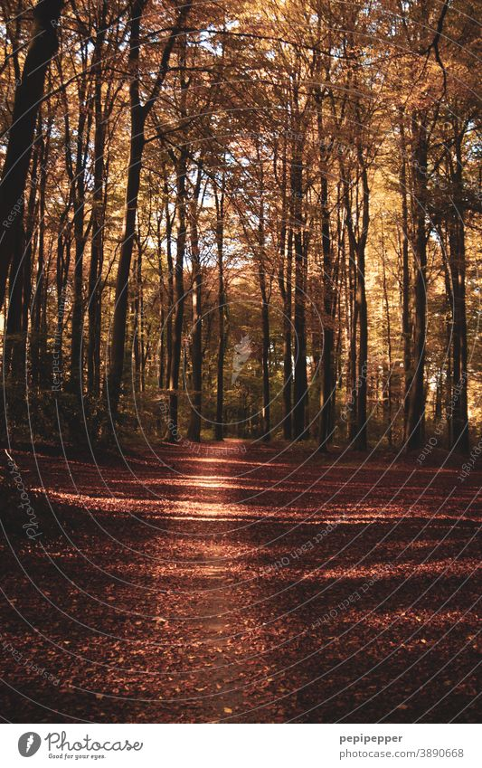 Forest trail in autumn off Autumn Nature Tree Exterior shot Plant Lanes & trails Deserted Colour photo Brown trees Footpath Sunlight Hiking Shadow Relaxation