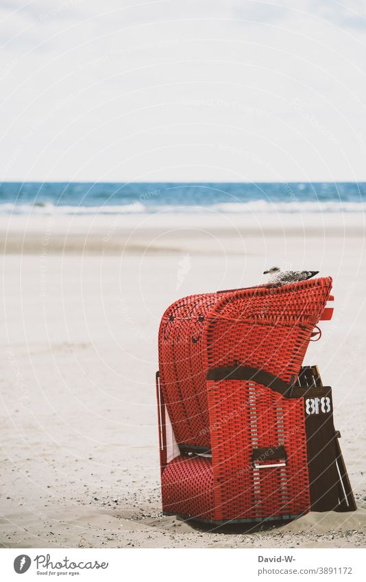 Beach chair with seagull on the beach Vacation & Travel tranquillity Seagull Ocean North Sea Baltic Sea Relaxation coast