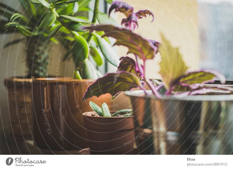Various indoor plants in flower pots on the windowsill Houseplants flowerpots Window board Green Plant Potted plants Flowerpot at home Foliage plant Pot plant