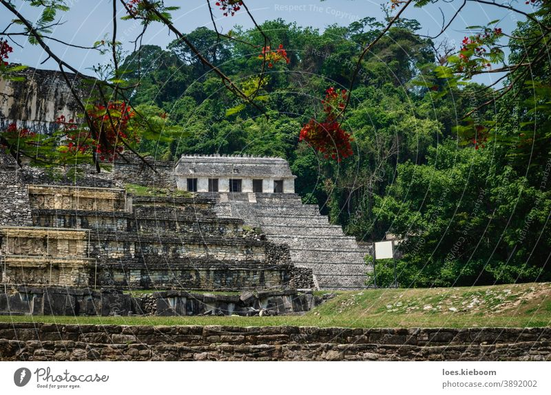 Temple of the inscriptions and palace at the archaeological Mayan site in Palenque, Chiapas, Mexico palenque maya ancient mayan tourism travel mexico stone