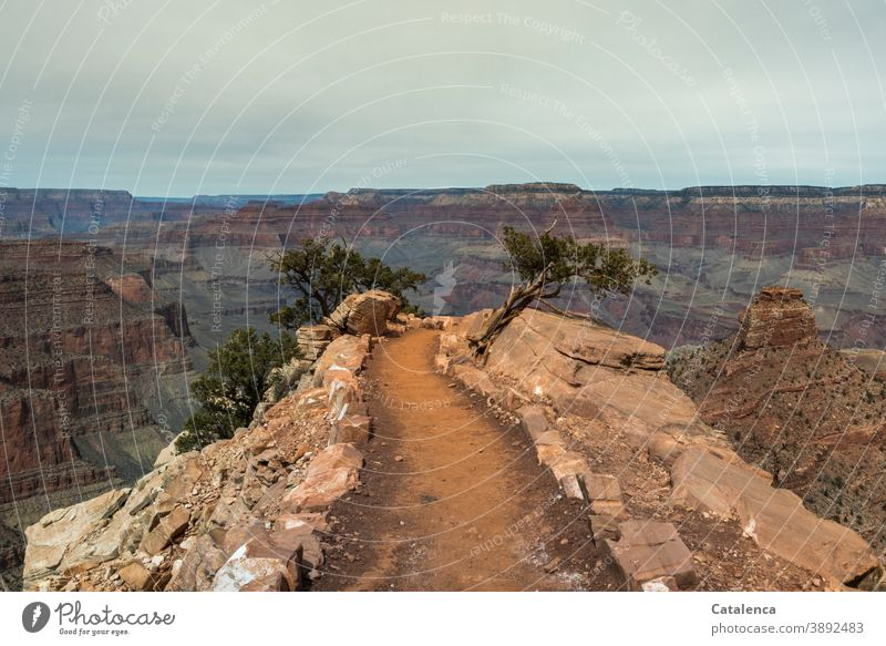 The narrow path into the abyss, hiking trail at the Grand Canyon paths and paths Hiking trails Nature Landscape Plants conifers Jawbone stones Rock