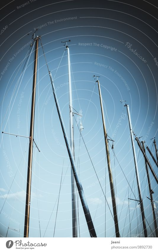 Blue sky in the harbour | masts of the sailing boats tower high marina Harbour Sky Pole Sailboat sailboats Watercraft Navigation Sailing ship's mast Ocean Lake
