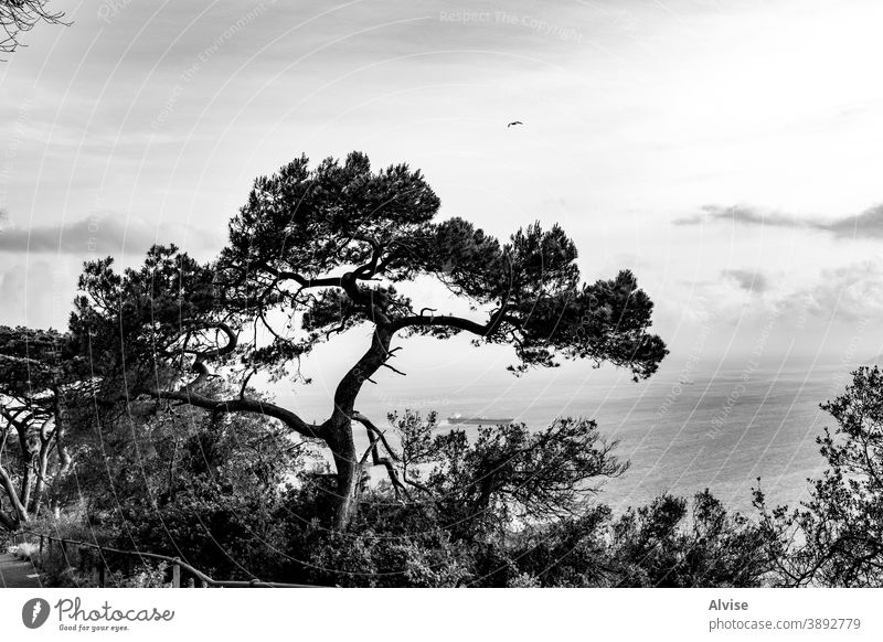 tree on the gibraltar bay nature silhouette forest branch isolated wood outline design background plant set white trunk season shape black image landscape birch