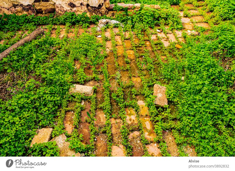 grass and bricks vintage old background wall pattern architecture stone texture retro green nature design natural construction brown surface building abstract