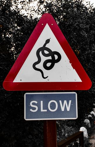 non-generic admonition in the street snake sign symbol wildlife animal icon design nature isolated background art cobra white serpent danger reptile drawing