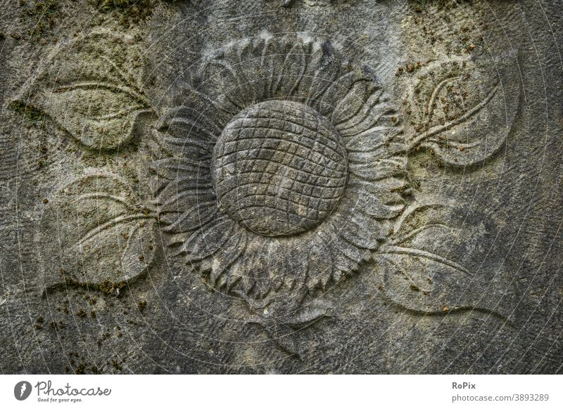 Picture of a sunflower on a weathered gravestone. Cemetery Prayer Follower Belief prayer graveyard Death death Grief mourning religion consolation confident