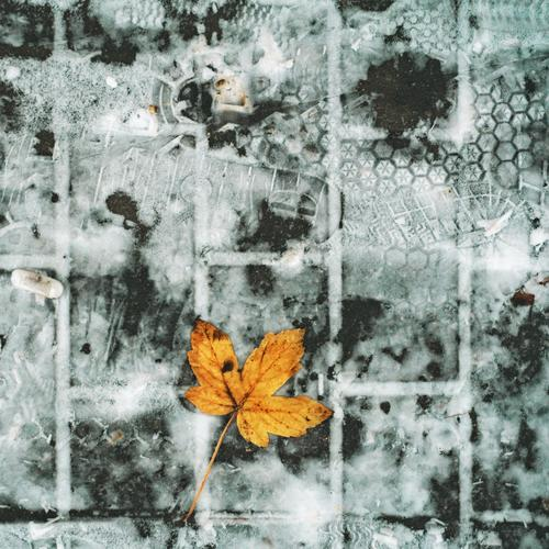 Tracks in the snow Snow Leaf Environment Contrast Detail Close-up Exterior shot Subdued colour Colour photo Transience Old Sidewalk Autumnal colours