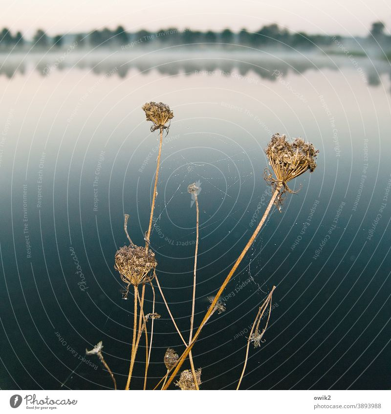 yarrow wide Calm Beautiful weather Cloudless sky Horizon stalks Surface of water Plant Sunlight Reflection Landscape Lakeside Panorama (View) Light tranquillity