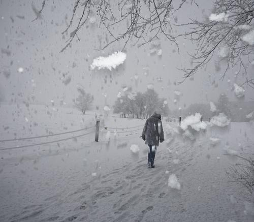 fresh snow Winter Snow Snowfall snowflakes Flash photo Crazy a lot Muddled Cold Exterior shot Tree Nature Environment Branch Sky Landscape Idyll Peaceful