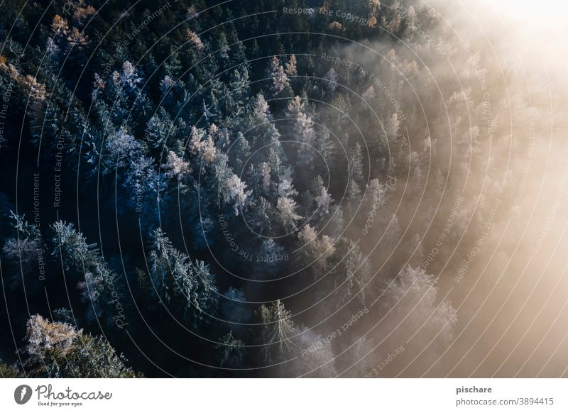 Forest from above Fog trees Tree Autumn Winter Bird's-eye view Cold Landscape Nature Exterior shot Colour photo Frost Light Environment Weather Winter forest