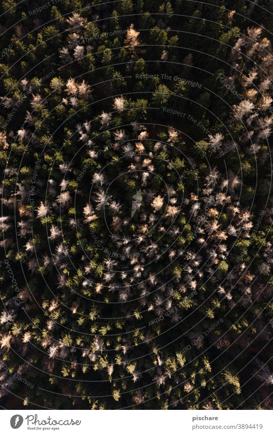 Forest from above trees Nature Bird's-eye view Autumn Flying Tall height Landscape Pattern Exterior shot Environment Deserted Tree Sunlight Green Colour photo