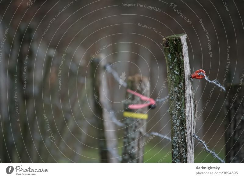 Fence of wooden posts with wire at the edge of a pasture with electrical fuse Electrified fence Willow tree country Agriculture old rural Scene color tapes