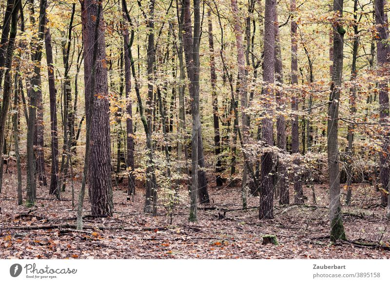 Deciduous forest in autumn Forest Autumn Yellow Green Nature Tree Leaf Brown Autumn leaves Automn wood Autumnal Autumnal colours