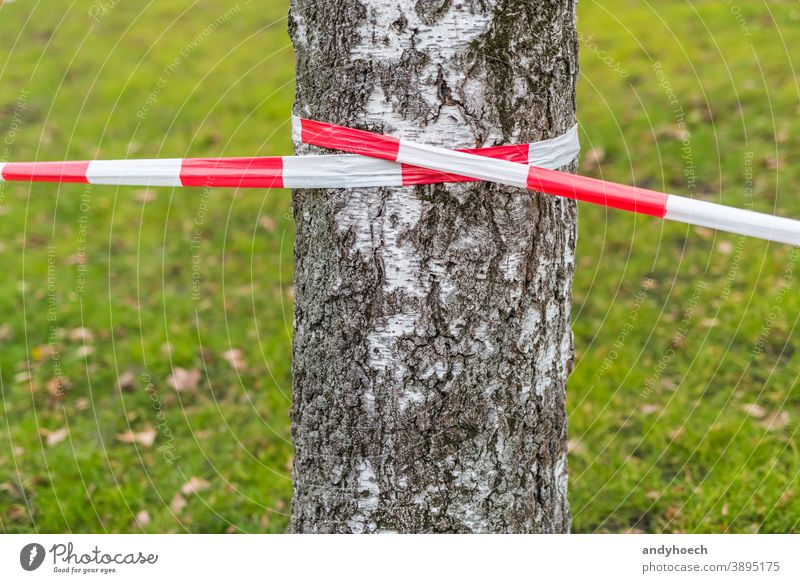 Barrier tape on a birch tree with a meadow in the background green zone security boundary grass crime striped symbol area line forbidden barrier red scene