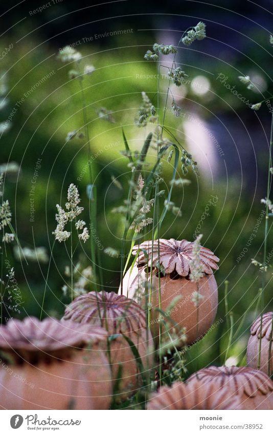 poppy #2 Poppy Meadow Summer Spring Craft (trade) Handicraft Flower Calm Grass
