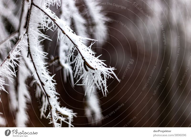 Hoarfrost covered leaves in Wiesbaden V Hoar frost Frozen Miracle of Nature Fascinating Colour photo Acceptance Plant Deciduous tree Tree Structures and shapes